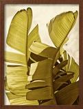 Palm Fronds III