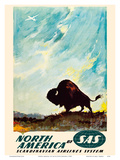 North America - by SAS Scandinavian Airlines System - American Bison (Buffalo)