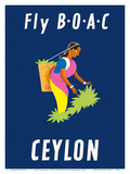 Ceylon (Sri Lanka) - BOAC (British Overseas Airways Corporation) - Sri Lankan Tea Picker