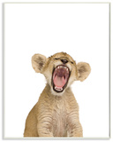 Baby Lion Cub Studio Photo