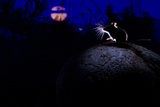 Deer Mouse (Peromyscus Maniculatus) On Giant Puffball Mushroom  Watching Mosquito In The Moonlight