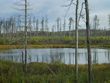 Bog Near North Shore  Lake Superior  Ontario