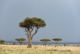 A Rainstorm Approaching in the Masai Mara Plains  Kenya