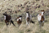 Wild Horses  Family Group