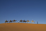 Morocco  Sahara a Row of Camels Travels the Ridge of a Sand Dune