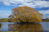 Willow Tree  Lake Tuakitoto  Near Benhar  South Otago  South Island  New Zealand
