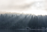 Washington State  Shafts of Morning Light Piercing Fog Make God Rays Through Trees