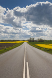 Denmark  Jutland  Hobro  Country Road with Rapeseed Fields  Springtime
