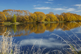 Autumn Colour and Clutha River at Kaitangata  Near Balclutha  New Zealand