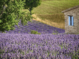 France  Provence Lavender Fields Near a Home