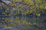 Quiet Morning in Fall  Cabot Trail  Cape Breton  Nova Scotia  Canada  North America