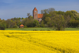Denmark  Mon  Magleby  Town Church and Rapeseed Field  Springtime  Dawn