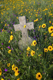 Wildflowers Blooming in Cemetery Near Rockport  Texas