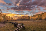 Dramatic Sunset Light on Aspen Grove at Owl Creek Pass in the Uncompahgre National Forest  Colorado