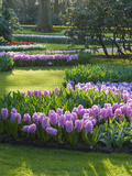 Sunlit Spring Garden with Hyacinth and Daffodils