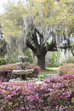 South Carolina  Frampton Plantation  Patio and Garden