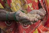 India  Uttar Pradesh  Mirzapur Woman Holding Grain