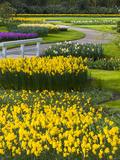 Path in Daffodil Garden