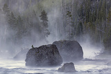 Boulders in Early Morning Mist  Gibbon River  Yellowstone National Park  Wyoming
