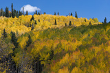 Colorado Autumn Yellow Aspen  Mountains  and Clouds  Uncompahgre National Forest