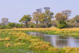 Botswana Okavango Delta Khwai Concession Riparian Forest