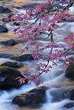 Smoky Mountains National Park  Fall Foliage at a Mountain Stream