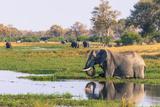 Botswana Okavango Delta Khwai Concession Elephant Drinking