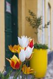 Denmark  Jutland  Ribe  Street and Flowers