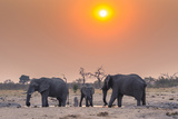 Botswana Chobe National Park Savuti Harvey's Pan Elephants Drinking at a Water Hole at Sunset
