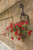 Italy  Tuscany  Pienza Colorful Petunias Spill from a Basket on a Stone Wall