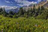 Alpine Wildflowers with Garden Wall at Logan Pass in Glacier National Park  Montana  Usa