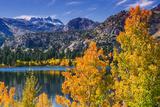 Golden Fall Aspen at June Lake  Inyo National Forest  Sierra Nevada Mountains  California  Usa