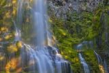 Proxy Falls in the Three Sisters Wilderness  Oregon  Usa