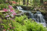 Waterfall with Ferns and Azaleas at Azalea Path Arboretum and Botanical Gardens  Hazleton  Indiana