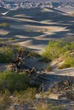 California Death Valley National Park Sunset Shadow on Sea of Sand Dunes  Mesquite Dunes