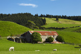 Old Stone Barn and Farmland  Near Taieri Mouth  Dunedin  Otago  South Island  New Zealand