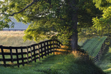 Farm Fence at Sunrise  Oldham County  Kentucky