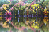 Autumn Trees  Reflection  Great Long Pond  Somesville  Mount Desert Island  Maine  Usa