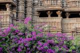 India  Madhya Pradesh State Temple of Kandariya with Bushes of Bougainvillea Flowers in Foreground