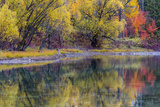 Autumn Colors Reflect into the Whitefish River in Whitefish  Montana  Usa