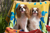 Cavaliers at a Pool Party
