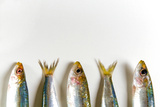 Fresh Anchovies on White Background