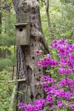 Birdhouse and Azaleas  Azalea Path Arboretum and Botanical Gardens  Hazleton  Indiana