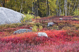 Autumn  Blueberry Barrens  Granite Rocks  East Orland  Maine  Usa