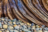 Washington State  Olympic National Park Beach Rocks and Driftwood