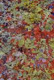 Lichen on Red Rock Formations Near Flagstaff  Arizona