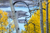 Yellow Autumn Leaves on Turquoise Aspen Waters  Silver Jack Reservoir  Uncompahgre National Forest
