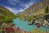 Spring Flowers and Kawarau River  Kararau Gorge  Central Otago  South Island  New Zealand
