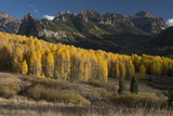 Colorado Autumn Yellow Aspen and Fir Trees Near Owl Creek Pass  Uncompahgre National Forest