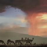 Impala and Lighting  Kenya  Africa